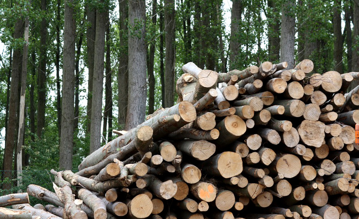 Biomass for energy production